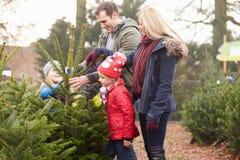 Familie im Freien, die zusammen Weihnachtsbaum wählt Lizenzfreie Stockfotografie