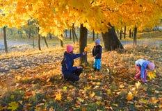Familie im Herbstahornholzpark Lizenzfreie Stockbilder