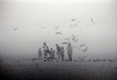 Familie op mistig strand met zeemeeuwen Royalty-vrije Stock Foto