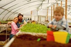 familie in serre het gelukkige familiewerk in serre serrefamiliebedrijf familie in serre met klein kind royalty-vrije stock afbeeldingen