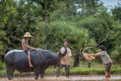 Familie Thaise Landbouwer met buffels Royalty-vrije Stock Foto's
