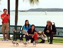 Familie und Vögel auf der Bank in Miami lizenzfreie stockfotografie