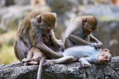 Familie van apen Royalty-vrije Stock Afbeelding