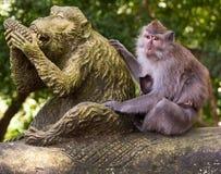Familie van apen. Stock Afbeeldingen