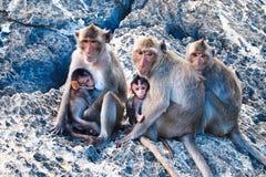 Familie van apen Stock Fotografie