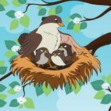 Familie van de vogel van de vogelsmoeder met haar twee babys in het nest Royalty-vrije Stock Afbeelding