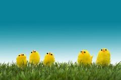 Familie van gele kuikens Stock Foto's