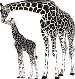 Familie van giraffen Stock Foto