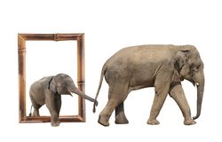 Familie van olifant in bamboekader met 3d effect Stock Foto