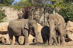 Familie van olifanten Stock Foto