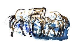 Familie van paarden Royalty-vrije Stock Afbeeldingen