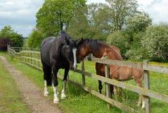 Familie van paarden Stock Foto