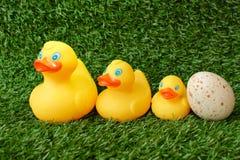 Familie van stuk speelgoed eenden op gras Royalty-vrije Stock Foto's