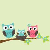 Familie van uilen Stock Foto