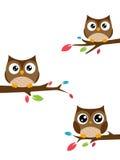 Familie van uilen op een boomtak die worden gezeten Stock Afbeeldingen