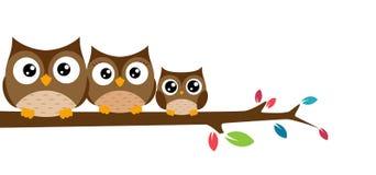 Familie van uilen op een boomtak die worden gezeten Stock Afbeelding