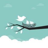 Familie van vogels die de baby voeden Stock Afbeeldingen
