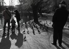 Familie voedende duiven in Central Park in Cluj Napoca, Roemenië royalty-vrije stock fotografie