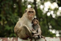 Familie von Affen Lizenzfreies Stockfoto