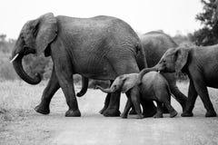 Familie von afrikanischen Elefanten Lizenzfreie Stockfotos