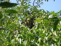 Familie von Bienen stockbild