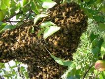 Familie von Bienen lizenzfreie stockfotografie