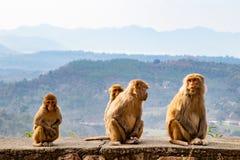 Familie von den Affen, die auf der Straßenseite sitzen lizenzfreies stockfoto