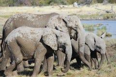 Familie von den Elefanten, die im Schlamm spielen - Nationalpark Etosha - Namibia stockbild