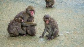 Familie von den japanischen Makaken, die zusammen die Köpfe zusammenstecken Lizenzfreie Stockfotos