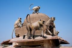 Familie von den wilden Affen, die auf einem Steinzaun sitzen Lizenzfreie Stockbilder
