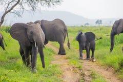 Familie von Elefanten mit einem Baby Lizenzfreie Stockfotos