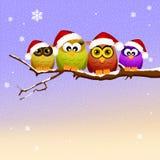 Familie von Eulen am Weihnachten Lizenzfreie Stockfotos