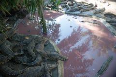 Familie von Krokodilen am Zoo auf der Ufergegend Lizenzfreie Stockfotografie