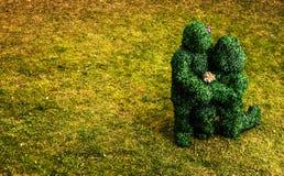 Familie von Livebüschen Märchenartfoto im Freien Stockfotografie