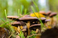 Familie von Pilzen Lizenzfreie Stockfotos