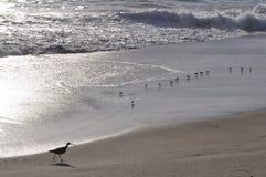 Familie von Vögeln am Strand Lizenzfreies Stockbild