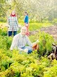 Familie wählt Karotte auf dem Gebiet aus stockfoto