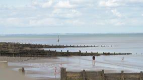 Familien genießen, im Meer mit einer Ebbe auf einem englischen Strand auf der Ostküste zu spielen stock video
