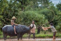 Familien-thailändischer Landwirt mit Büffel Lizenzfreie Stockfotos