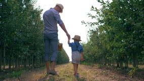 Familienbeziehungen des Vaters und des Sohns, des Vatis und des Kindes gehen zwischen Baumreihen mit einem Korb der Frucht in der stock video