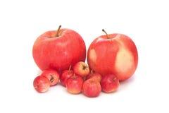 Familienfoto Äpfel auf Weiß Stockbilder