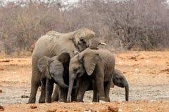 Familiengruppe Elefanten Stockbild