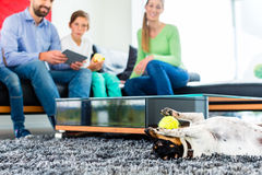 Familienhund, der mit Ball im Wohnzimmer spielt Lizenzfreie Stockfotos