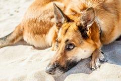 Familienhundeporträt Stockbilder
