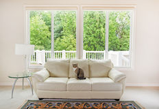 Familienkatze, die Sofa innerhalb des Wohnzimmers genießt Stockfotografie