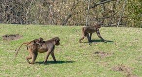 Familienpromenade an Bronx-Zoo lizenzfreies stockbild