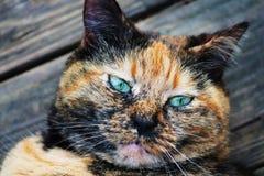Familienschildpatt-Katzenfreund draußen Stockfotos