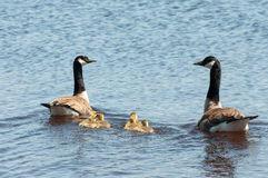Familienschwimmen Stockfotos