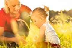 Familiensommer - durchbrennenlöwenzahnstartwerte für zufallsgenerator Stockfoto