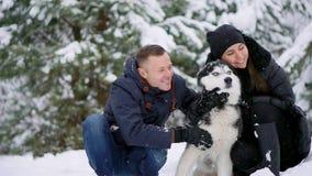 Familieportret van leuk gelukkig paar die met hun malamutehond koesteren die van Alaska man gezicht likken Het grappige puppy dra stock video